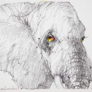 Biała głowa słonia o żółtych oczach.  Lekko obrócony w prawą stronę. Białe tło.