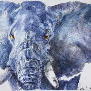 Niebieski słoń podczas o żółtych oczach i białych kłach. Białe tło.