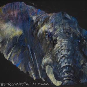 Ciemnoniebieska głowa słonia z szarymi elementami. Czarne tło.