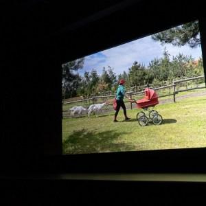 Na ekranie wyświetlone zdjęcie nr 26. Kobieta w czerwonym kapeluszu pcha czerwony wózek i prowadzi na smyczy dwie kozy.