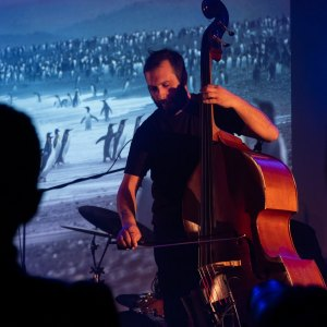 Dwie ciemne głowy. Pośrodku oświetlony kontrabasista. Za nim talerz perkusji. W tle wyświetlone zdjęcie przedstawiajace stado pingwinów.