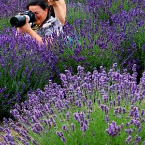Dwie fotografki z aparatami przy twarzach w krzakach lawendy. Jedna kieruje obiektyw w lewo, druga w prawo.