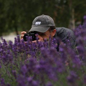 Za krzakami lawendy pochylony fotograf z aparatem przy twarzy. Na głowie szara czapka z daszkiem.