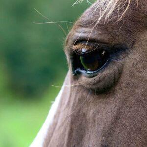 Fragment głowy konia. Zdjęcie Anny Struganek