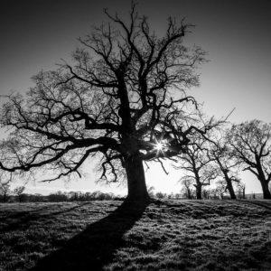 Czarno-białe zdjęcie drzew